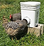 MuddyHillFarm Single Opening Chicken/Duck, Poultry Bucket Feeder, Holds 20lbs, Crumbles, Grain or Pellets Single Port