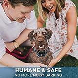 2020 New Upgrade Bark Collar for Large Medium Small Dog,Dog Bark Collar IP67 Waterproof Shock Collar,Rechargeable Anti Barking Collar for Dogs,Stop Barking Control Device,Humane & Safe Electric Collar