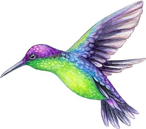 Amazon.com: Imán de vinilo con diseño de colibrí de colores ...