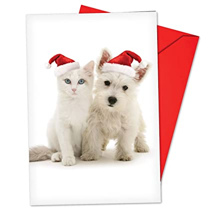 Christmas Notecard.Box Set Of 12 Copy Cats Christmas Notecard A Featuring Adorable White Scottie Puppy And Kitten In Matching Santa S Hats For Christmas With Envelopes