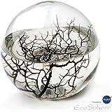 EcoSphere Mega Kugel - Miniaquarium aus der NASA Weltraumforschung - 23 cm Durchmesser und min. 40 Garnelen