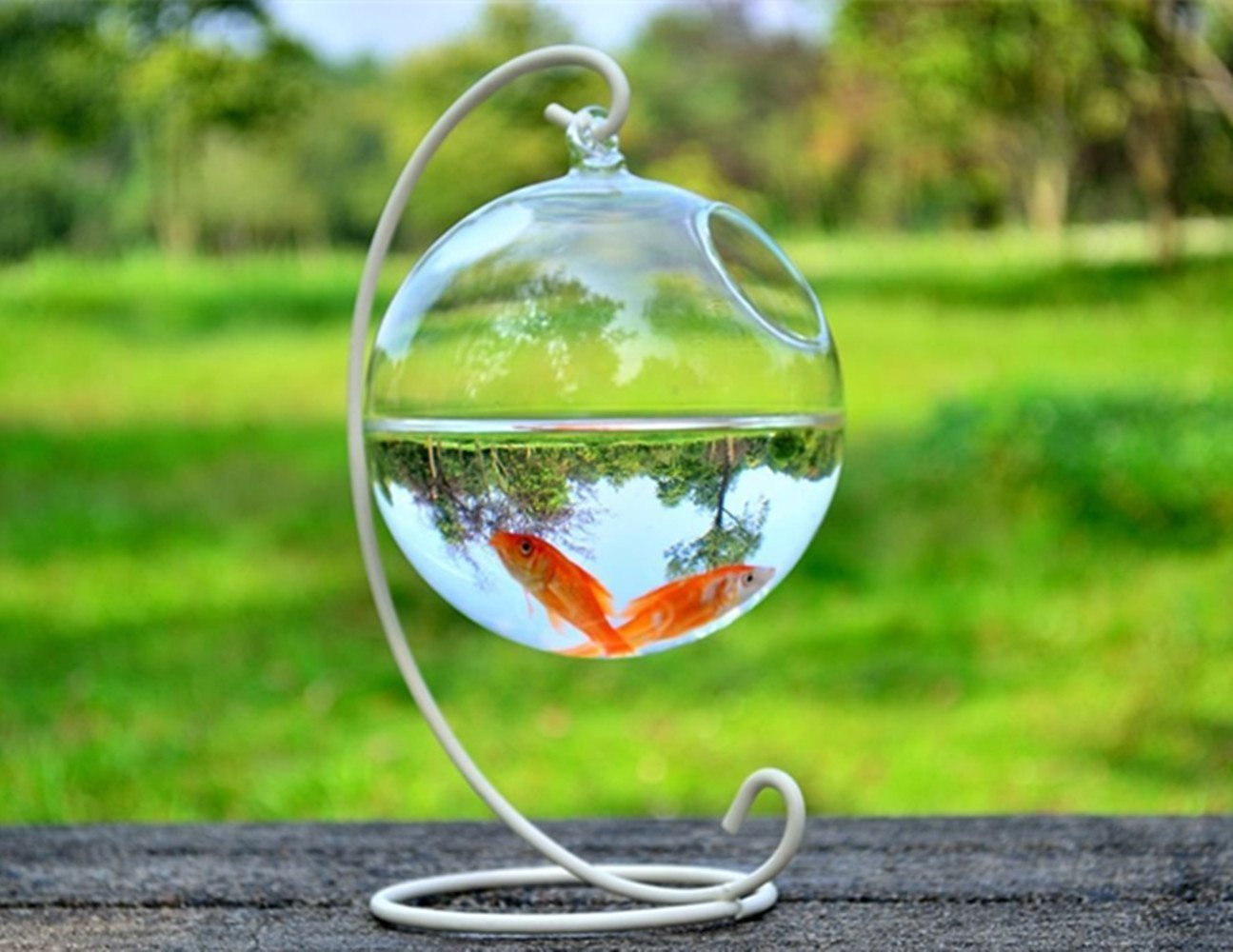 Smart sisi Aquarium Transparent sphérique en verre à suspendre (Comprend le support + Bol en verre)