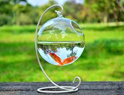 Amazon Hanging Glass Vase Fish Tank Transparent Spherical