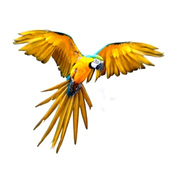 bird voice ringtone online