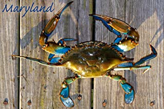 product image for Blue Crab on Dock, Maryland 48030 (12x18 SIGNED Print Master Art Print, Wall Decor Poster)