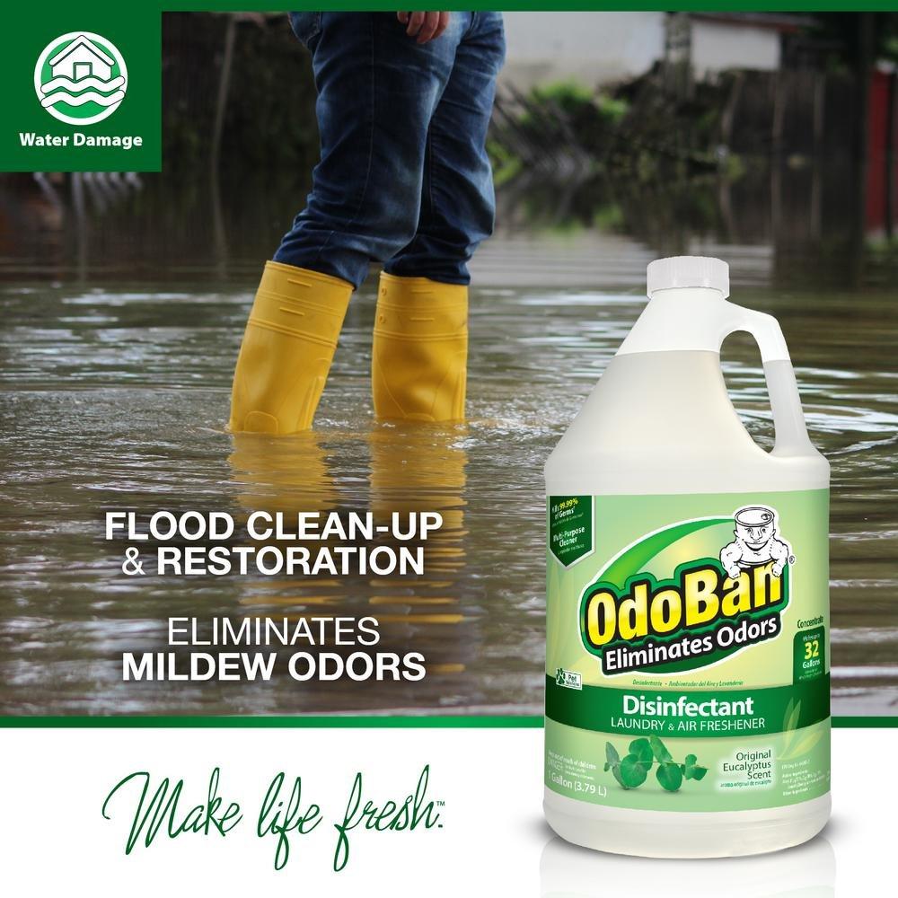 OdoBan Multipurpose Cleaner Concentrate, 1 Gal, Original Eucalyptus Scent - Odor Eliminator, Disinfectant, Flood Fire Water Damage Restoration by OdoBan