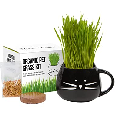 Cat Grass Growing Kit with Organic Seed Mix, Organic Soil and Cat Planter. Great Gift Idea for Fur Babies. Natural Hairball Control, Remedy for Cats. Natural Digestive Aid. USA Manufactured.