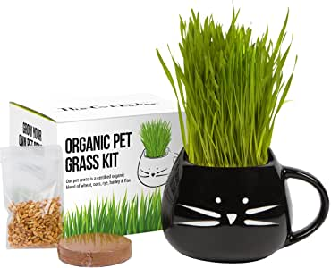 The Cat Ladies Hierba orgánica del Gato Kit Creciendo con la semilla orgánica MixBlack Negro: Amazon.es: Productos para mascotas