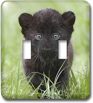 twin panther cubs neatorama