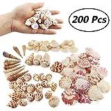 Weoxpr 200pcs Sea Shells Mixed Ocean Beach Seashells, Various Sizes Natural Seashells for Fish Tank, Home Decorations, Beach Theme Party, Candle Making, Wedding Decor, DIY Crafts, Fish Tan