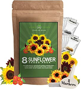 8 Sunflower Seeds to Plant   Bulk 1000+ Seeds   Heirloom Seeds   Non-GMO Flower Seeds for Planting Outdoors   Garden Seeds for Baby Shower Favors or Wedding Favors   for Birds and Bees
