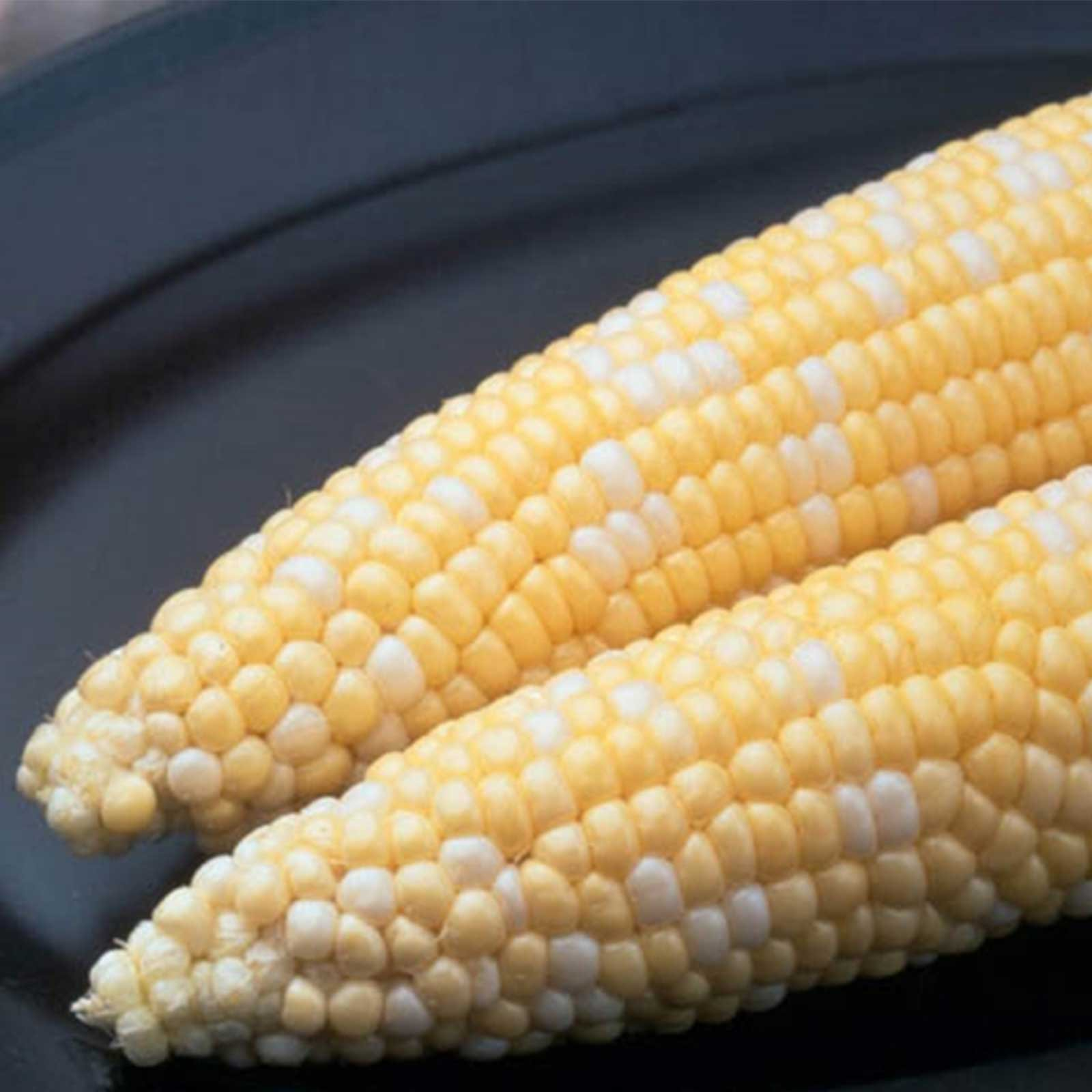 Ambrosia Hybrid Corn Garden Seeds - 5 Lbs - Non-GMO, Bi-Color SE Vegetable Gardening Seeds & Micro Corn Shoots by Mountain Valley Seed Company (Image #1)