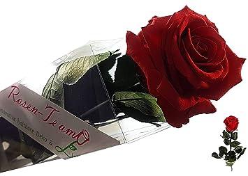 Rosen Te Amo Unvergängliche Echte Rose 275 Cm Groß 3 Jahre