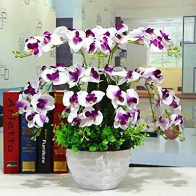 Humany flowerseeds- 100pcs Phalaenopsis Orchid, Bonsai Ornamental Seeds Flower Bulbs Flower Seeds Hardy Perennial for Barkon, Garden : Garden & Outdoor