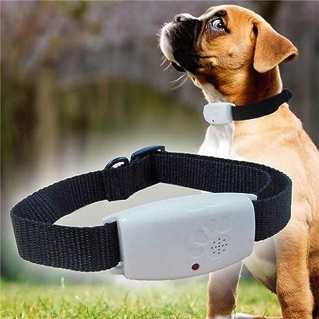 Chengstore - Collar para mascotas repelente de insectos para gatos y perros