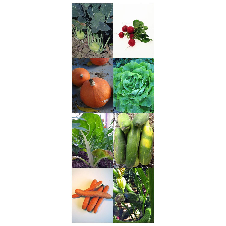 Magic Garden Seeds Hortalizas orgánicas - Kit Regalo de Semillas ...