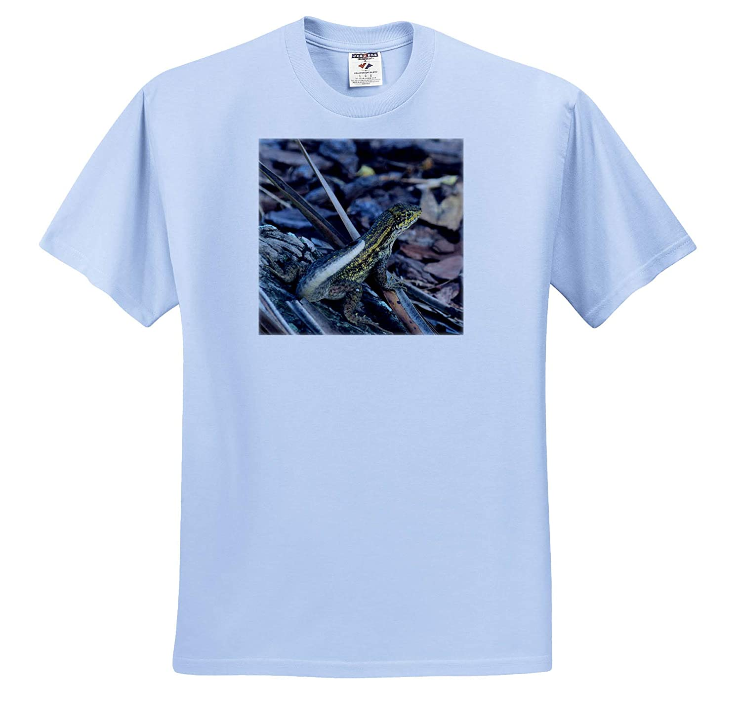 T-Shirts Curly Tailed Lizard on Mulch Reptile Florida 3dRose Susans Zoo Crew Animal