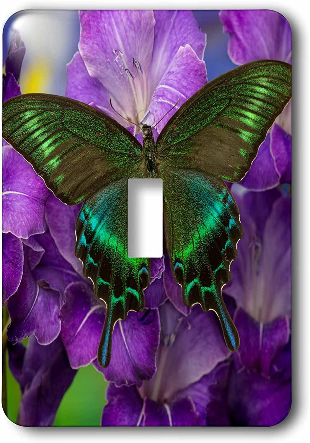 3drose Lsp 228394 1 The Common Peacock Swallowtail Butterfly Single Toggle Switch Amazon Com