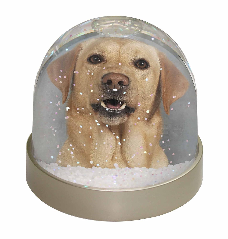 Advanta Yellow Labrador Snow Dome Globe Waterball Gift, Multi-Colour, 9.2 x 9.2 x 8 cm Advanta Products AD-L3GL