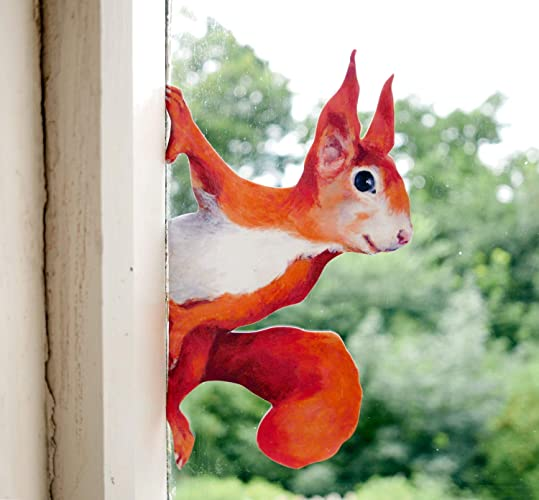 Amazon Com Peeping Squirrel Wall Decal Woodland Stickers