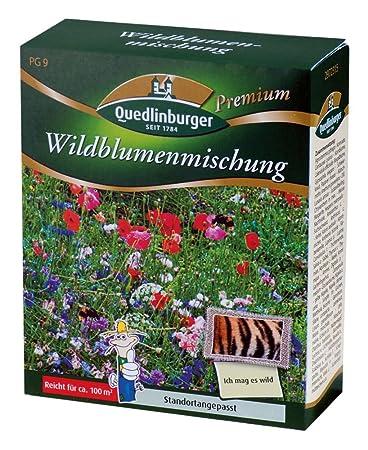Blumenwiese Englisch blumenwiese wildblumenmischung ohne gräser quedlinburger