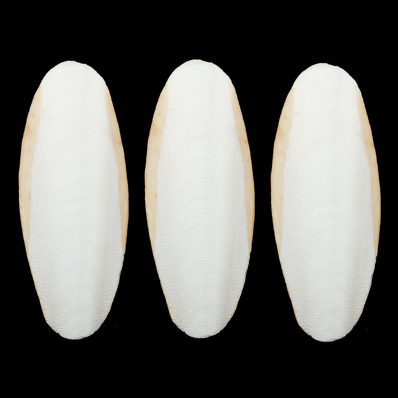 10-12CM(4-5 Inches) Long SMALL Cuttlefish Bone 3 PIECES Orimiu