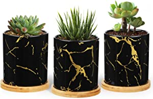 T4U Ceramic Plant Pots for Succulents with Round Trays - 3 Inch Cylinder Small Succulent Planter with Drainage - Gardening Home Desktop Office Decoration - Black Small Cactus Holder Set of 3