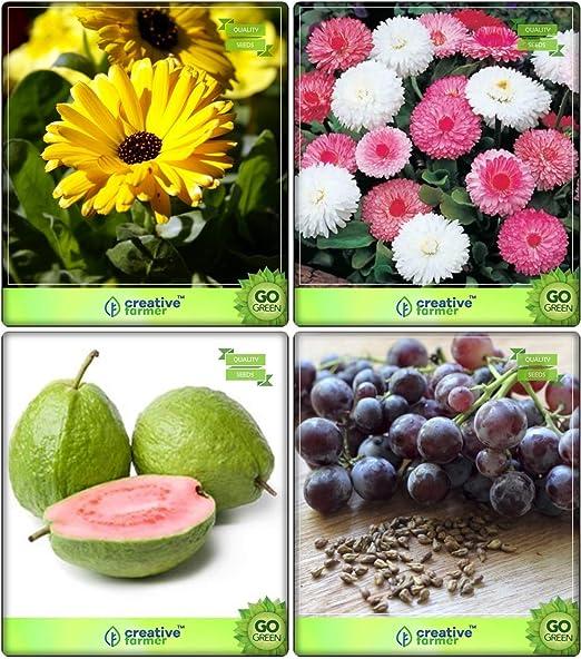 Semillas BloomGreen Co. y Plantas Combo de frutas: limón guayaba ...