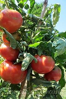 AGROBITS 10 graines de Tomate raro cimelio Mikado Pomodoro Biologico Vedere