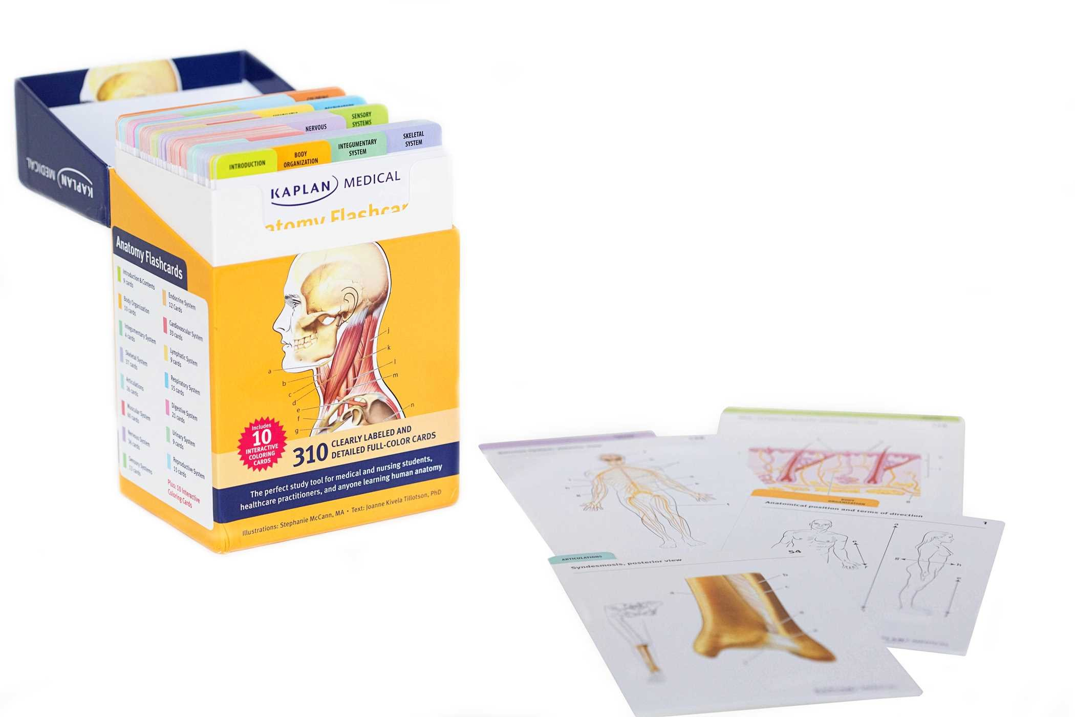 Buy Anatomy Flashcards Book Online At Low Prices In India Anatomy