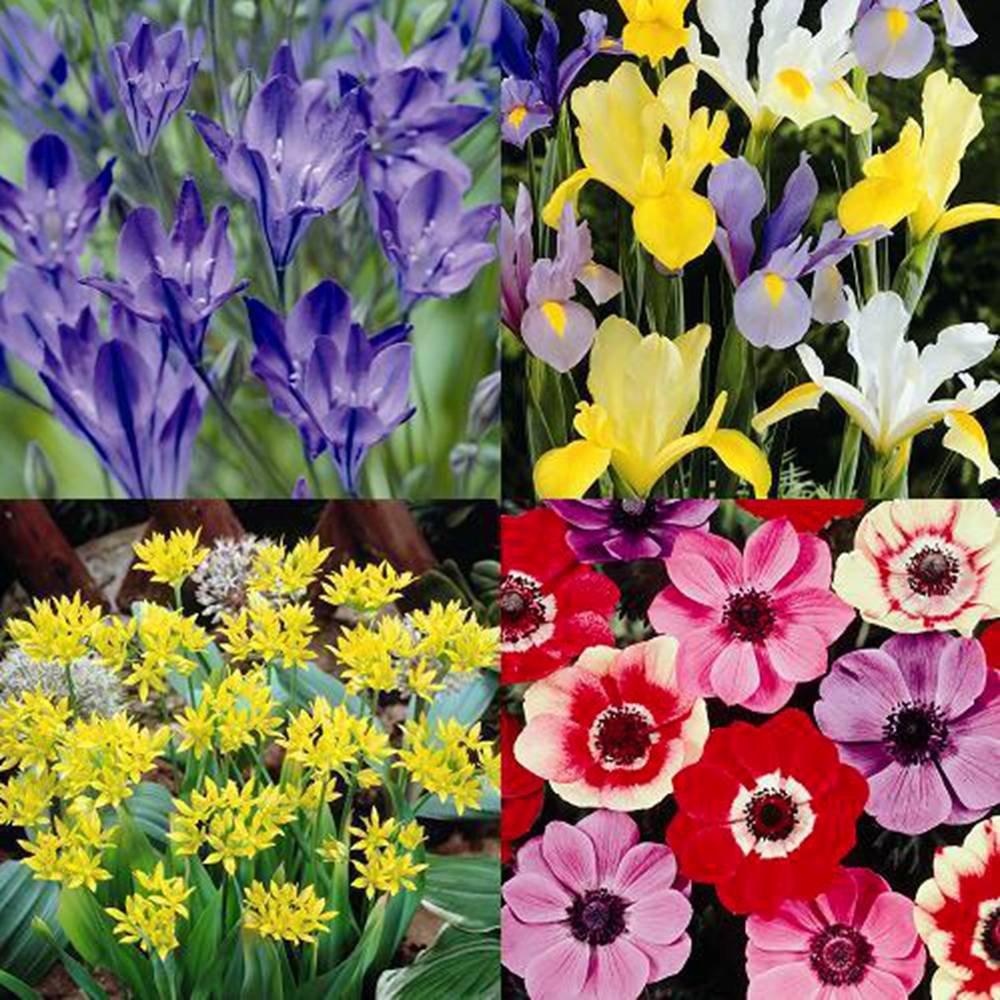 flower bulbs for sale