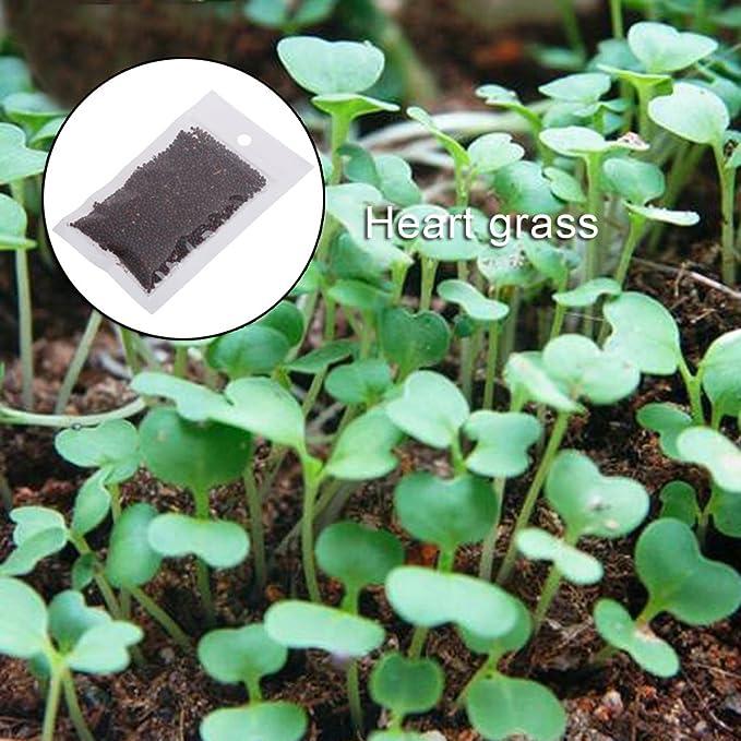 Kofun Acuático Planta Semillas Pecera Agua Adorno Acuario Decoración 1 Bolsa, Heart-Shaped Grass, 1 Bag: Amazon.es: Hogar