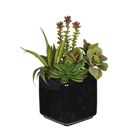 Amazon house of silk flowers artificial succulent garden b in house of silk flowers artificial succulent garden b in black cube vase mightylinksfo