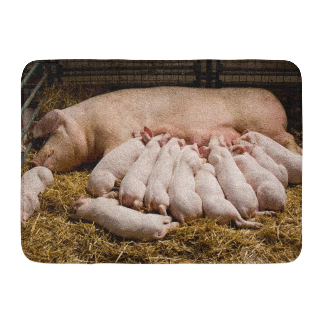 Emvency Bath Mat Animal Pink Pig Fertile Sow Lying on Hay and Piglets Suckling in Barn Baby Farming Bathroom Decor Rug 16'' x 24''