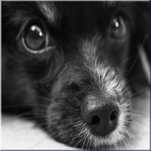 Adopt a Pet - Adopt A Pet