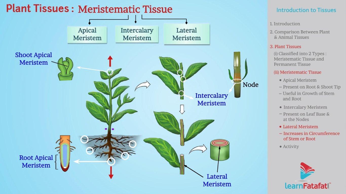 animal: Plant And Animal Tissues Class 9 Icse