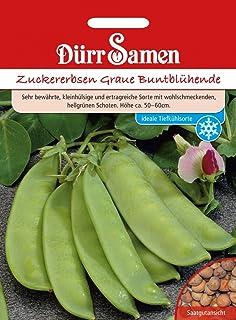 M/önchspfeffer/® White Spire kr/äftiger Strauch im 5lt.-Container