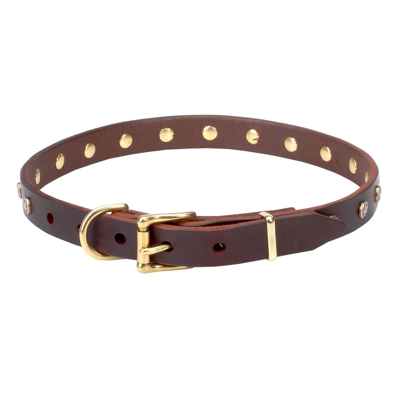 Gorgeous Elegant pet collars pictures