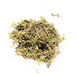 HEALLILY Dry Moss Forest Green Preserved Moss for Potted Plants Terrariums Fairy Gardens Arts Crafts Decor 100g
