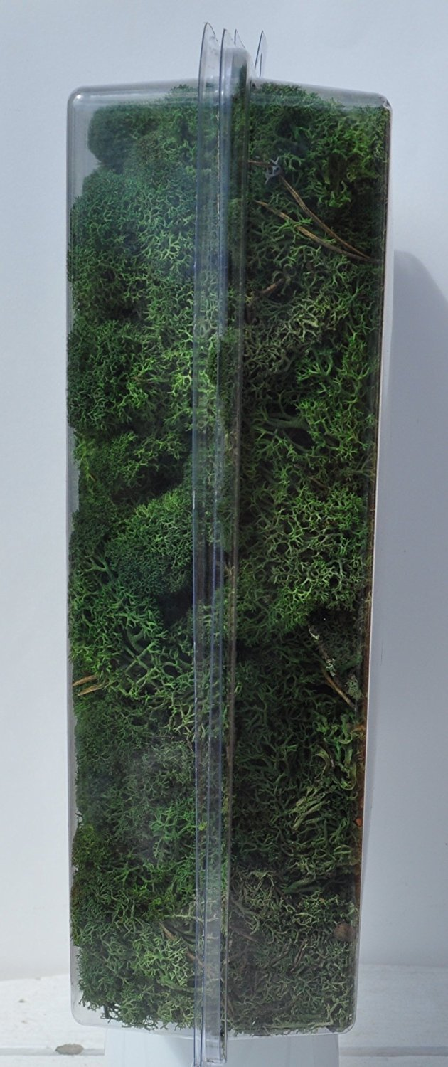 in a Designer Series Clear Case. 20-Ounce 1.25 Pounds Preserved Reindeer Moss Dark Green Reico Art 108054 - Soft and Colored Reindeer Moss Inc.