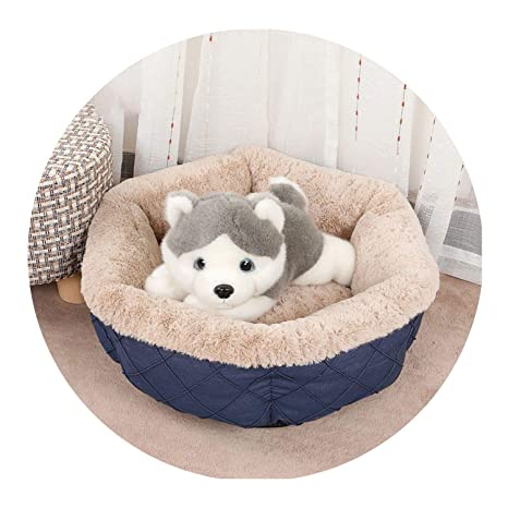 Amazon.com : Pet Supplies in Autumn and Winter 2019 Factory ...