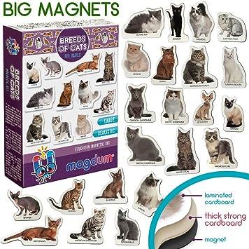 MAGDUM Imanes Foto Razas de Gatos - Imanes de Animales para la ...