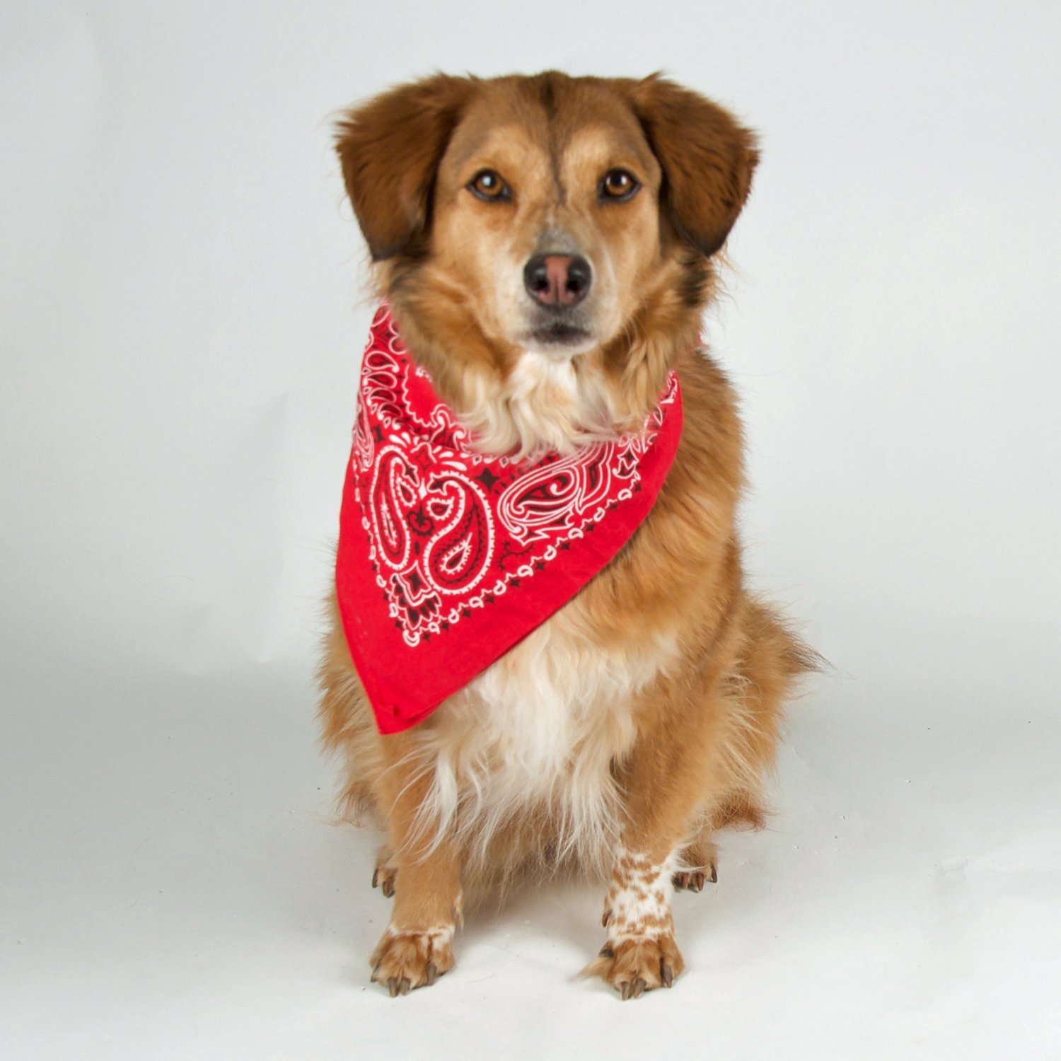 Bandana 3-Pack - Made in USA For 70 Years - Sold by Vets – 100% Cotton –Sewn Edges by OHSAY USA (Image #8)