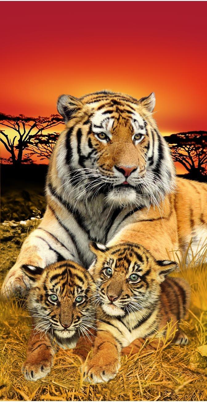 Tigre de Bengala y cachorro cara Wonder toallas de playa: Amazon.es: Hogar