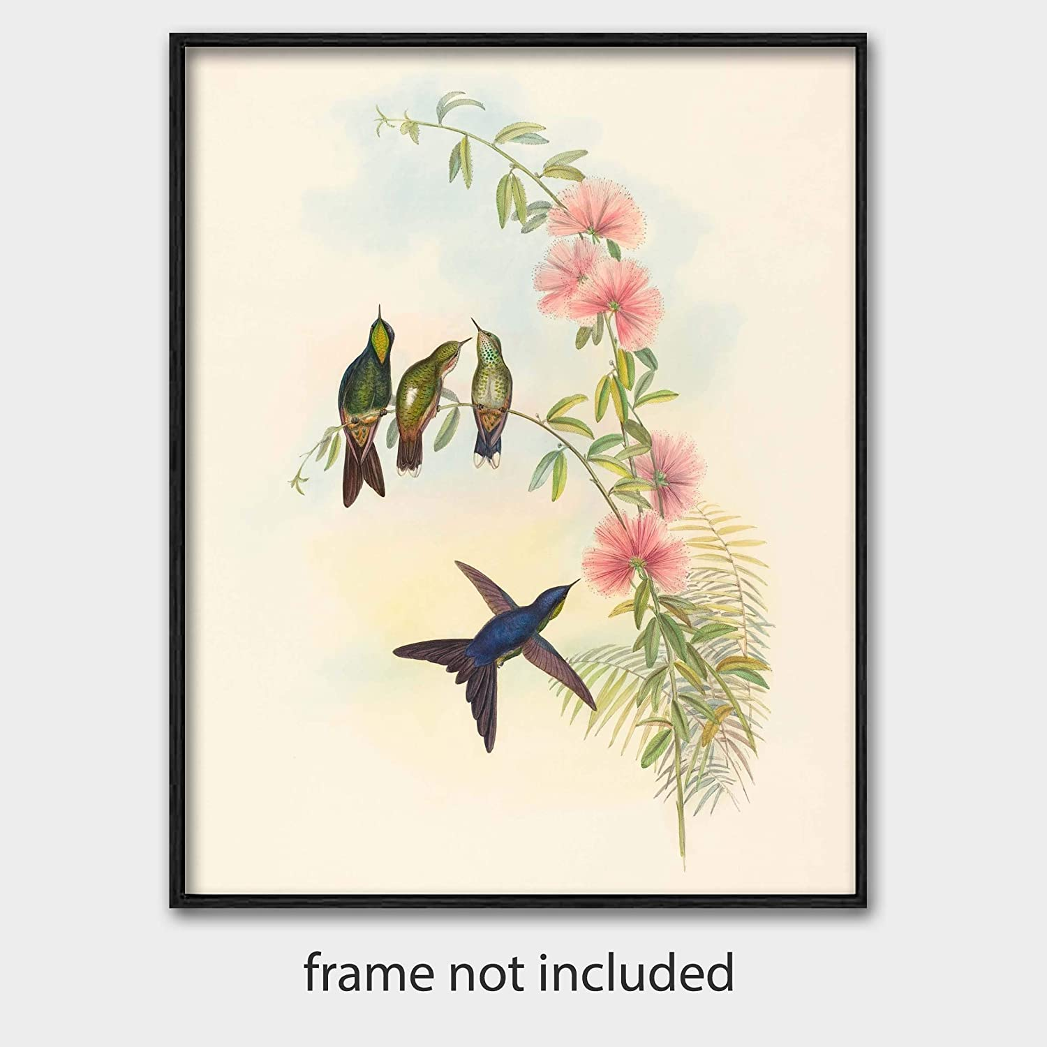 Humming Bird Home Decor Canvas Print choose your size.