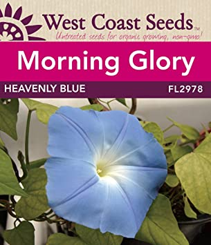 Morning Glory Seeds - Heavenly Blue
