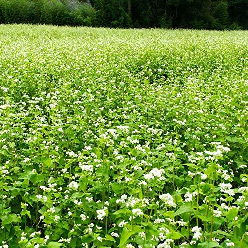 Buckwheat Seeds - 50 Lb Bulk - Organic, Non-GMO, Whole (Shell On) - Grow Buck Wheat Microgreens, Lettuce