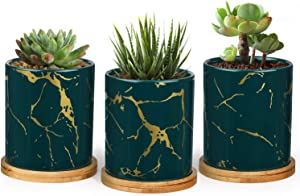 T4U Ceramic Plant Pots for Succulents with Round Trays - 3 Inch Cylinder Small Succulent Planter with Drainage - Gardening Home Desktop Office Decoration - Green Small Cactus Holder Set of 3