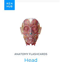 Anatomy flashcards: Head: Learn all organs, muscles, arteries, nerves and veins on the go (Kenhub Flashcards Book 63…