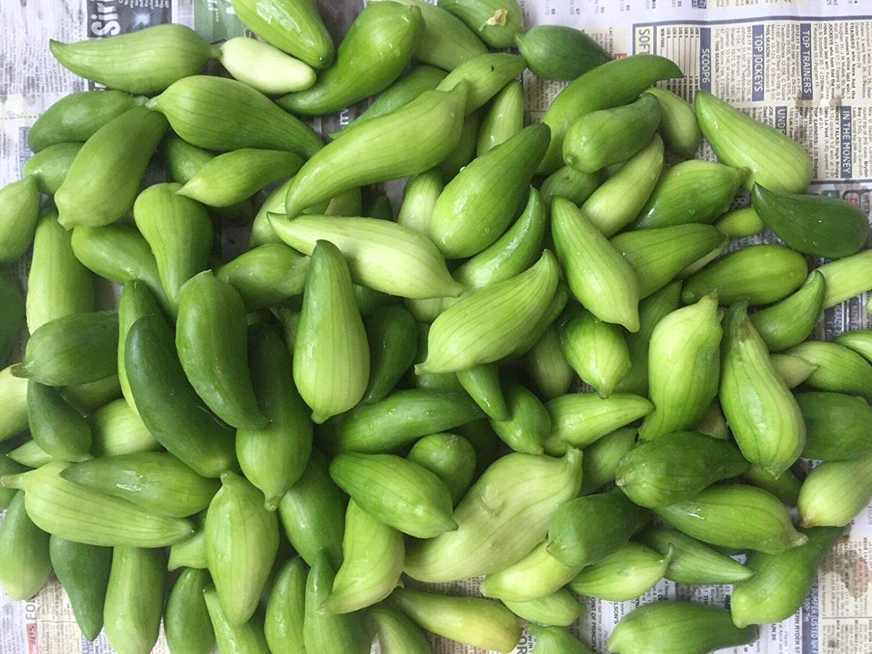 Portal Cool Seeds Special*Achocha Caigua Potol Fotol Large Fruit Rare Climber 15 Seeds